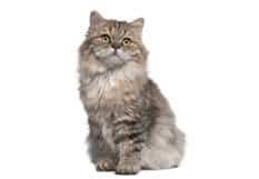 Nourriture sans grains pour chats